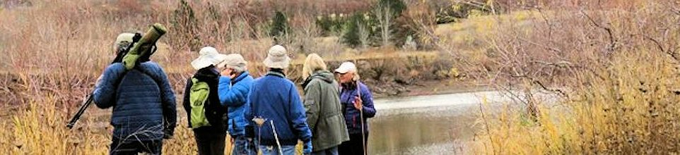 Weekly Bird Walks now at Bennington Lake