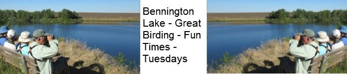 Bennington Lake Bird Walks 9:00 AM Start