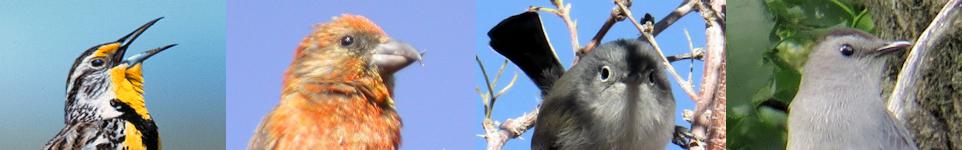 Birding Oregon Web Site