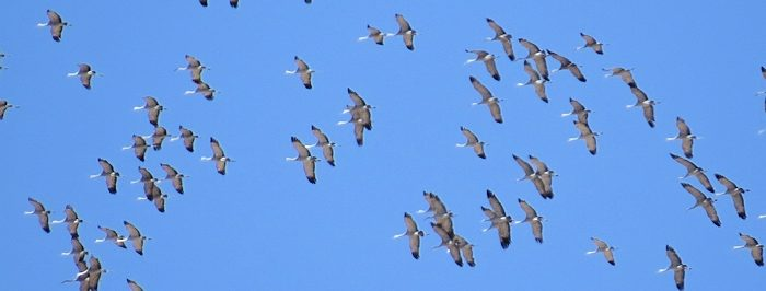 March Field Trip – Othello Sandhill Crane Festival