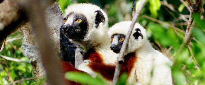January Membership Meeting:  Madagascar!