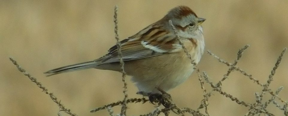 2019 Christmas Bird Count-46th Annual Event!