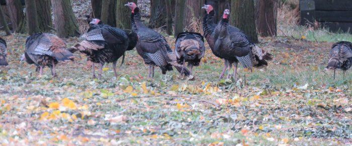 November Field Trip-Tom's Turkey Trot