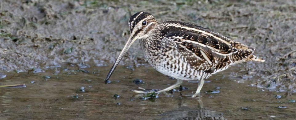 October Birding Ideas by Sue Parrish