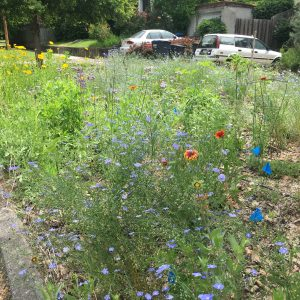 Heidi Dobson's mid-summer native garden