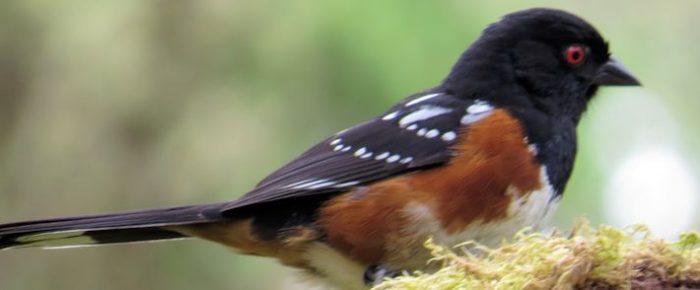 Birding for a Cause: A Bird-a-Thon for Blue Mt. Wildlife