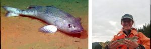 Sablefish/Willa Johnson