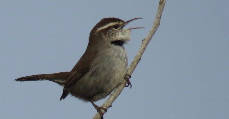 Check out Blue Mountain Audubon on Facebook!