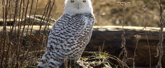 Winter Birding Ideas by Sue Parrish